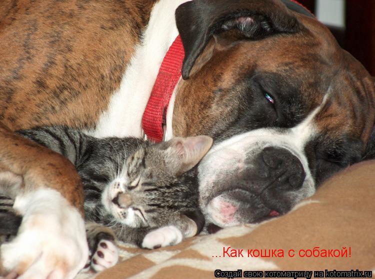 Котоматрица: ...Как кошка с собакой!