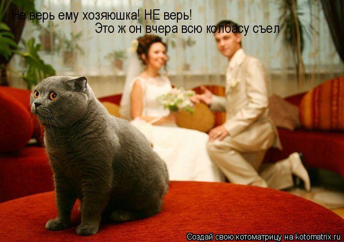 Котоматрица: Не верь ему хозяюшка! НЕ верь!  Это ж он вчера всю колбасу съел