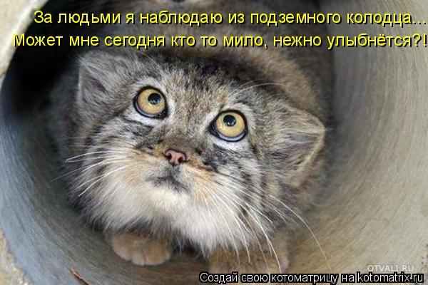 Котоматрица: За людьми я наблюдаю из подземного колодца... Может мне сегодня кто то мило, нежно улыбнётся?!