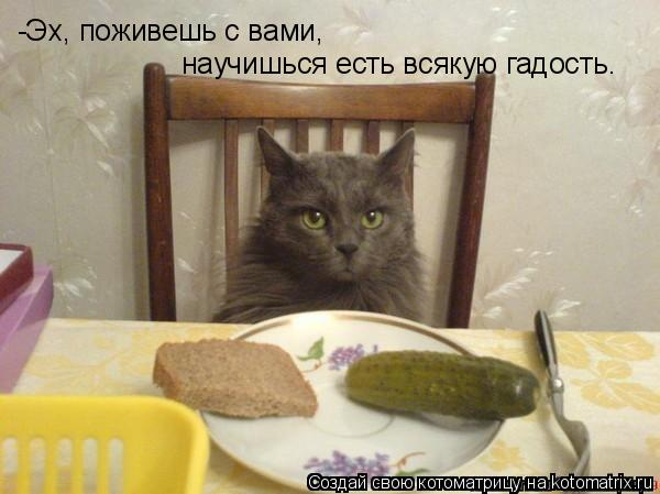 Котоматрица: -Эх, поживешь с вами,  научишься есть всякую гадость.