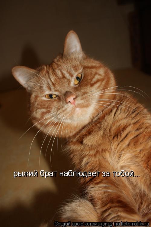 Котоматрица: рыжий брат наблюдает за тобой...