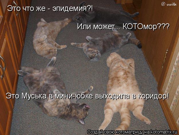 Котоматрица: Это что же - эпидемия?! Или может... КОТОмор??? Это Муська в мини-юбке выходила в коридор!