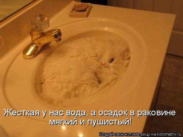 Котоматрица: Жесткая у нас вода, а осадок в раковине мягкий и пушистый!