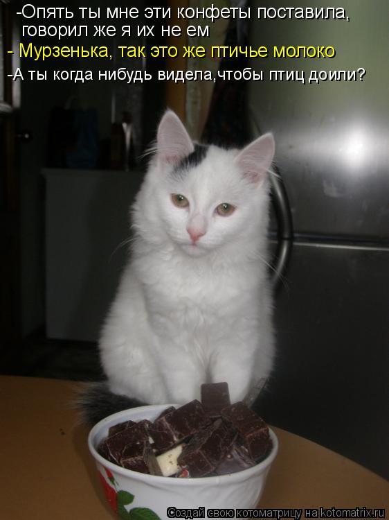 Котоматрица: -Опять ты мне эти конфеты поставила, говорил же я их не ем - Мурзенька, так это же птичье молоко -А ты когда нибудь видела,чтобы птиц доили?