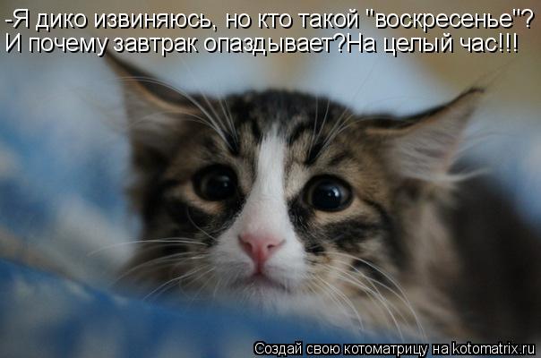 """Котоматрица: -Я дико извиняюсь, но кто такой """"воскресенье""""? И почему завтрак опаздывает?На целый час!!!"""
