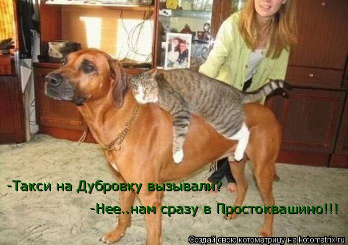 Котоматрица: -Такси на Дубровку вызывали? -Нее..нам сразу в Простоквашино!!!