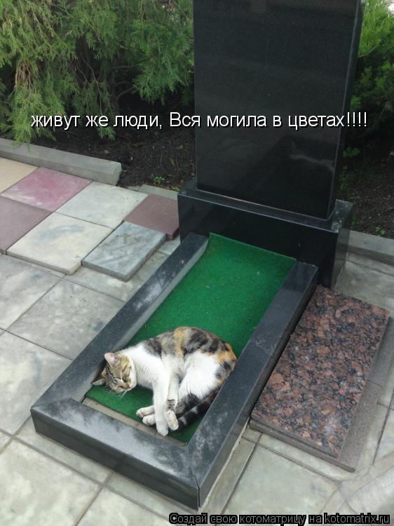 Котоматрица: живут же люди, Вся могила в цветах!!!!