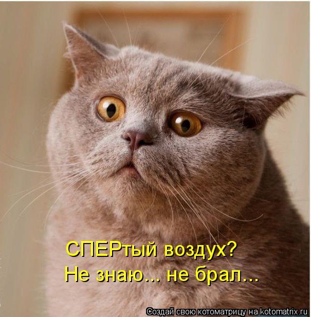 Котоматриця!)))) - Страница 8 992013