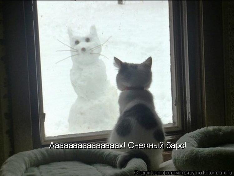 Котоматрица: Ааааааааааааааах! Снежный барс! Ааааааааааааааах! Снежный барс!