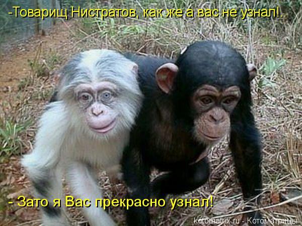 Котоматрица: -Товарищ Нистратов, как же а вас не узнал!..    - Зато я Вас прекрасно узнал!