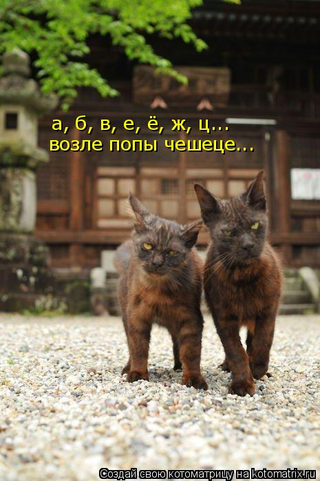 Котоматрица: а, б, в, е, ё, ж, ц... возле попы чешеце...
