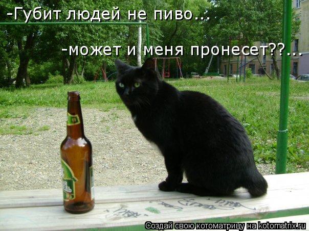 Котоматрица: -Губит людей не пиво... -может и меня пронесет??...