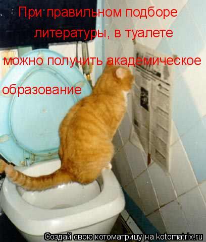 Котоматрица: При правильном подборе  литературы, в туалете  можно получить академическое образование