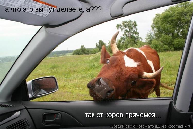 Котоматрица: а что это вы тут делаете, а??? так от коров прячемся...