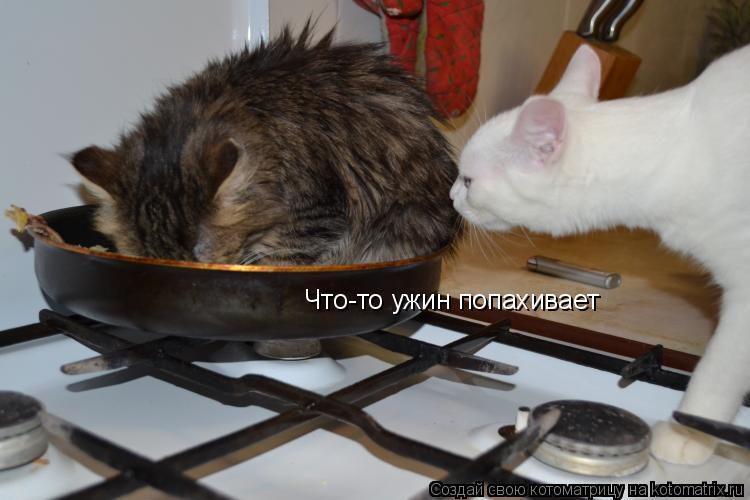 Котоматрица: Что-то ужин попахивает