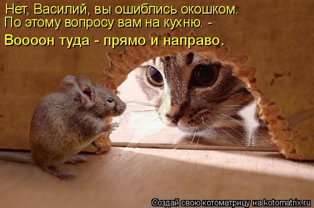 Котоматрица: Нет, Василий, вы ошиблись окошком. По этому вопросу вам на кухню. - Воооон туда - прямо и направо.