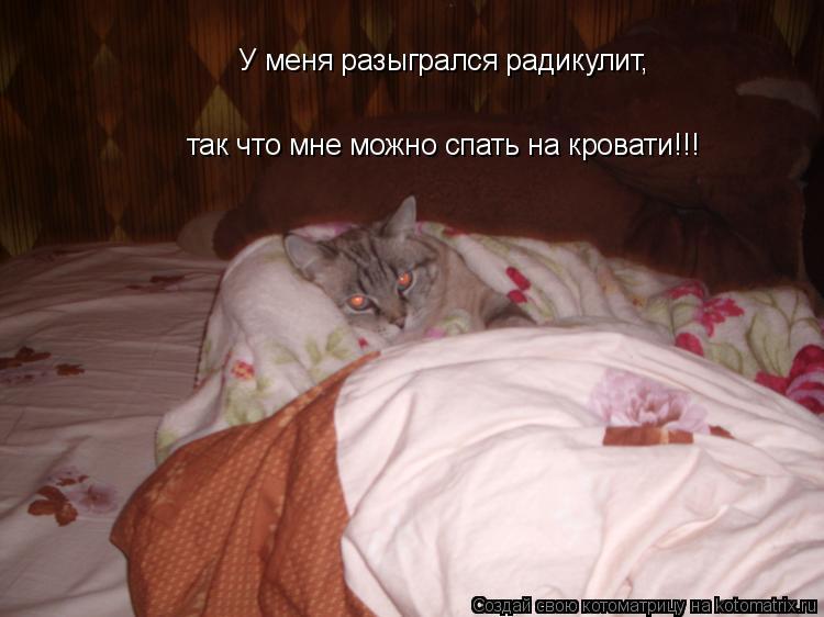 Котоматрица: так что мне можно спать на кровати!!! У меня разыгрался радикулит,