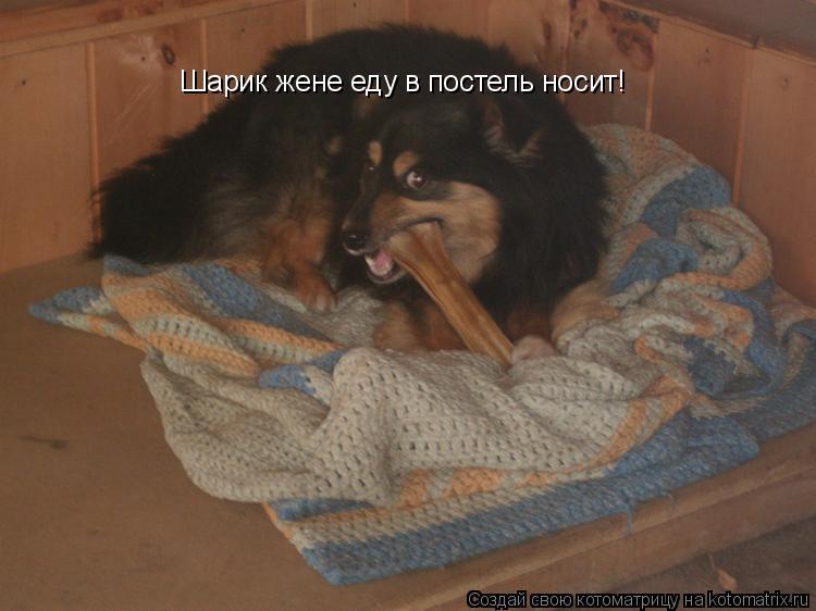 Котоматрица: Шарик жене еду в постель носит!