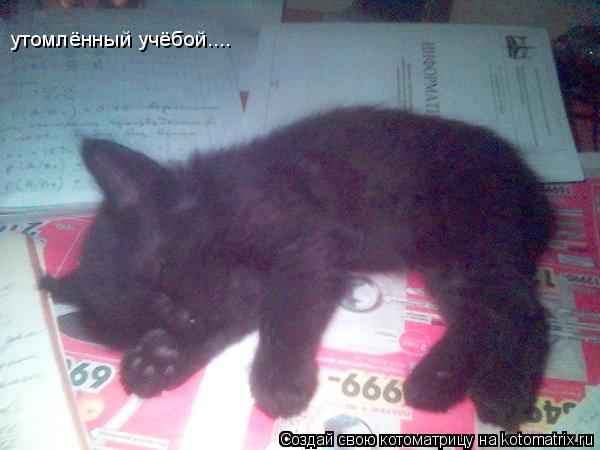 Котоматрица: утомлённый учёбой....