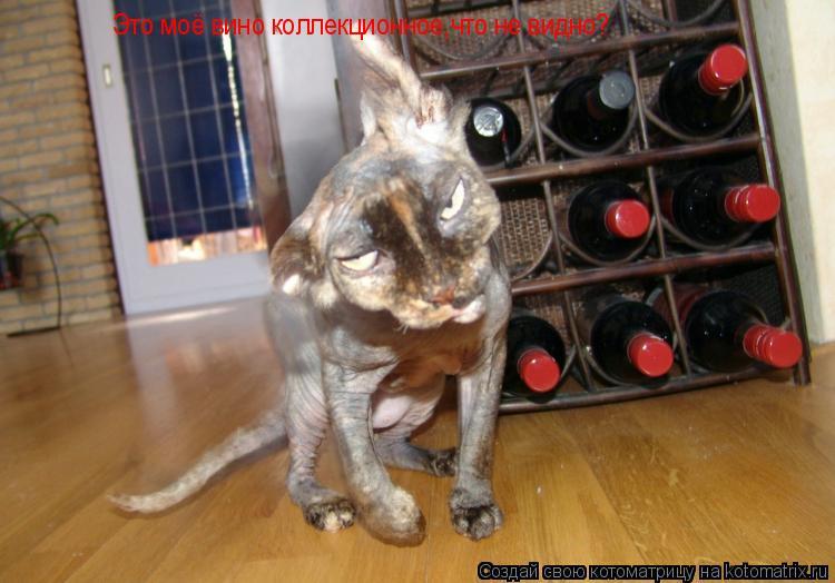 Котоматрица: Это моё вино коллекционное,что не видно?