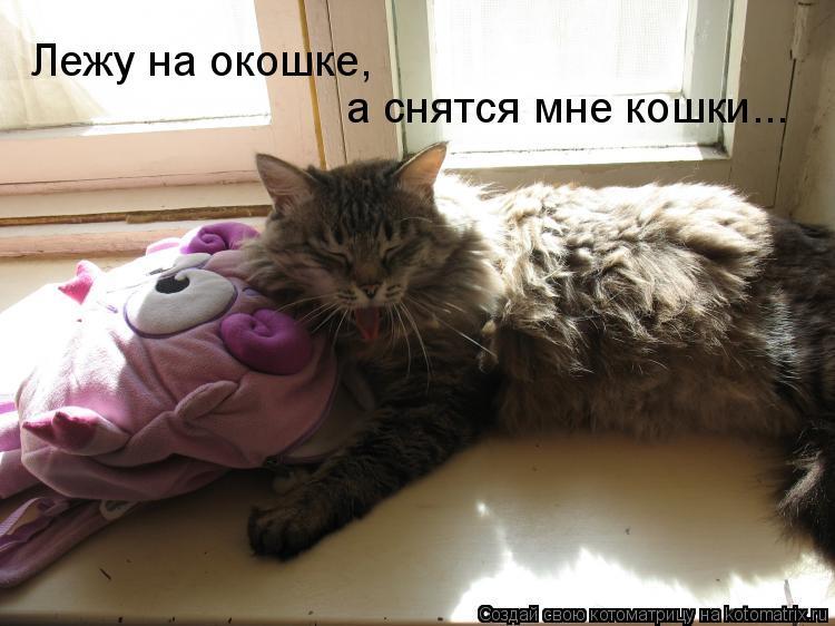 Котоматрица: а снятся мне кошки... Лежу на окошке,