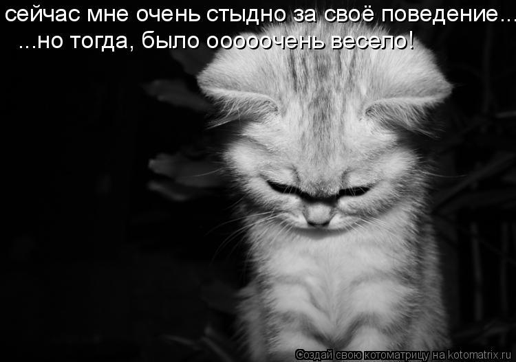 Котоматрица: сейчас мне очень стыдно за своё поведение... ...но тогда, было оooooчень весело!