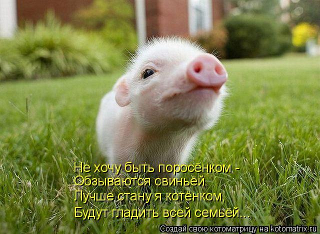 Котоматрица: Не хочу быть поросёнком -  Обзываются свиньёй.  Лучше стану я котёнком, Будут гладить всей семьёй...