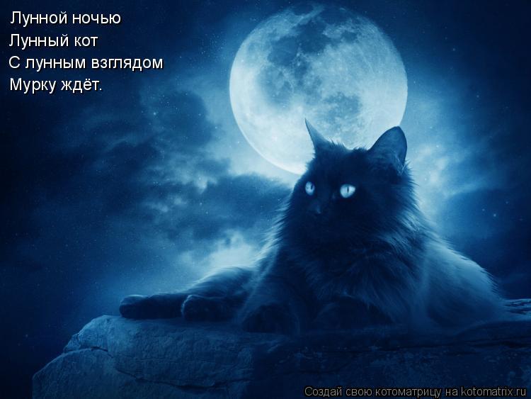 Котоматрица: Лунной ночью  Лунный кот С лунным взглядом Мурку ждёт.