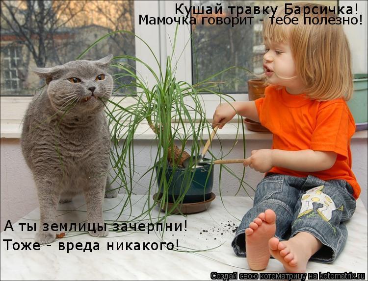 Котоматрица: Кушай травку Барсичка! Кушай травку Барсичка! Мамочка говорит - тебе полезно! А ты землицы зачерпни! Тоже - вреда никакого!