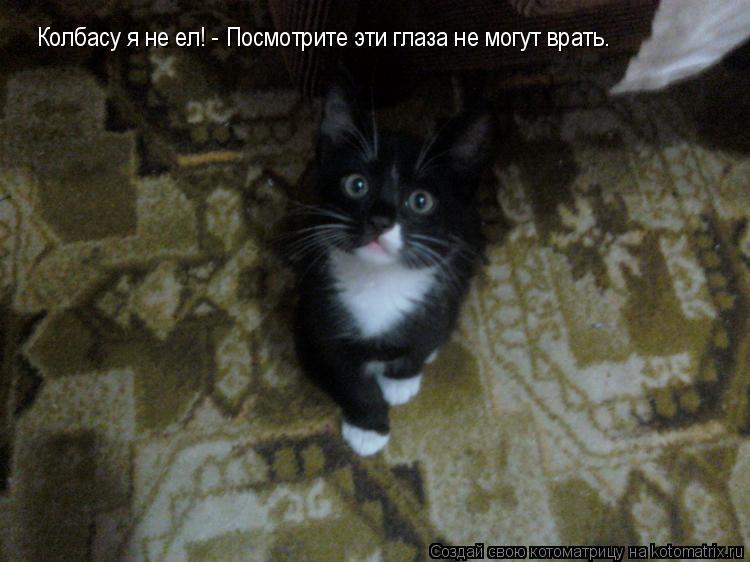 Котоматрица: Колбасу я не ел! - Посмотрите эти глаза не могут врать.