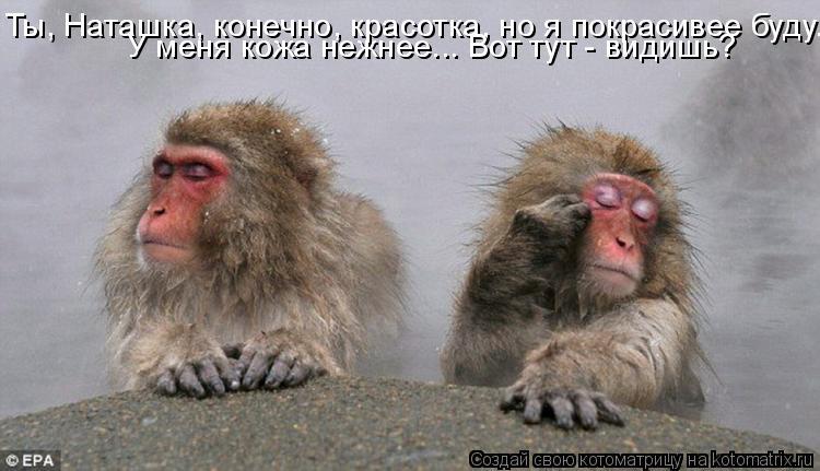 Котоматрица: Ты, Наташка, конечно, красотка, но я покрасивее буду. У меня кожа нежнее... Вот тут - видишь?