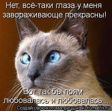 Котоматрица: Нет, всё-таки глаза у меня  завораживающе прекрасны! Вот так бы прям любовалась и любовалась...