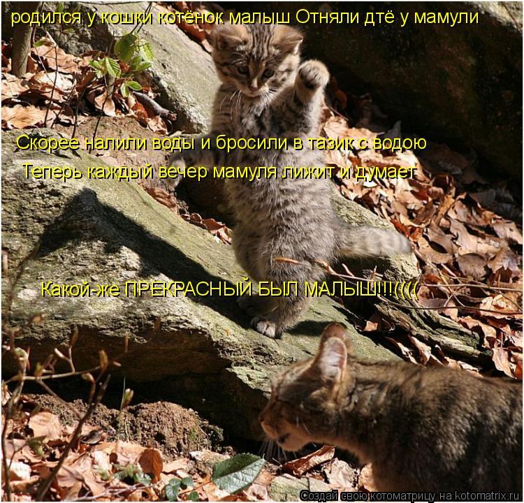 Котоматрица: родился у кошки котёнок малыш Отняли дтё у мамули Скорее налили воды и бросили в тазик с водою Теперь каждый вечер мамуля лижит и думает  Ка