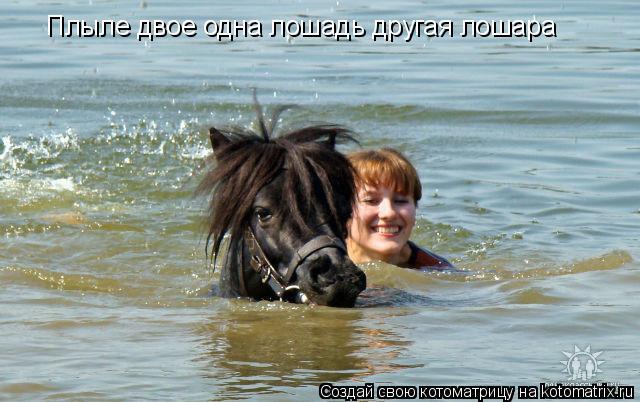 Котоматрица: Плыле двое одна лошадь другая лошара