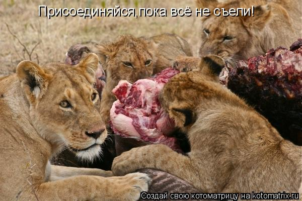 Котоматрица: Присоединяйся,пока всё не съели!