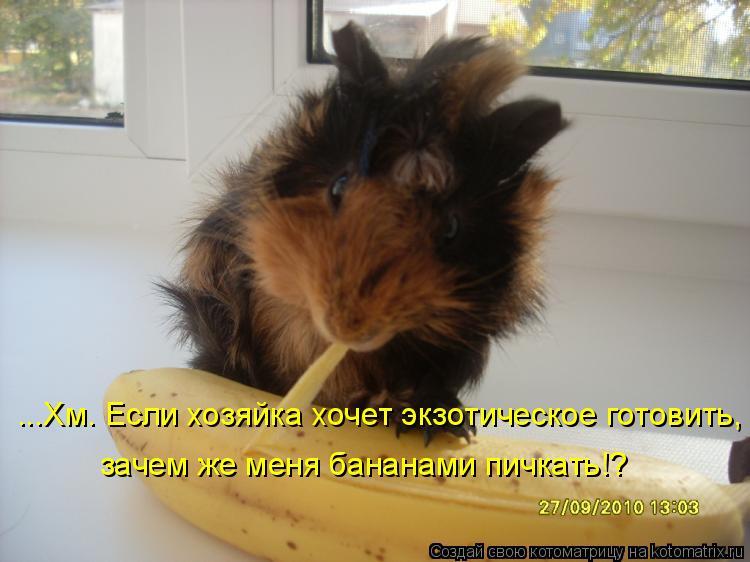 Котоматрица: ...Хм. Если хозяйка хочет экзотическое готовить, зачем же меня бананами пичкать!?