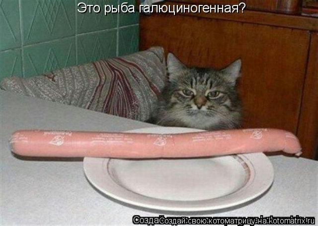 Котоматрица: Это рыба галюциногенная?
