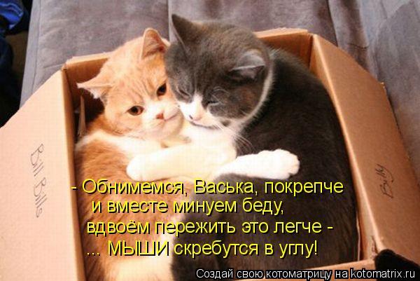 Котоматрица - - Обнимемся, Васька, покрепче и вместе минуем беду, вдвоём пережить эт