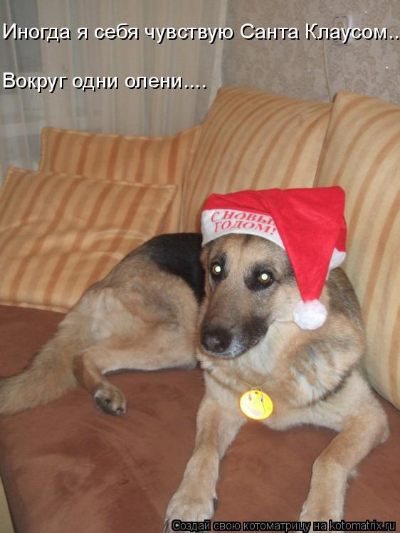 Котоматрица: Вокруг одни олени.... Иногда я себя чувствую Санта Клаусом.....