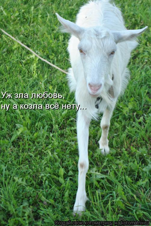 Котоматрица: Уж зла любовь,  ну а козла всё нету...