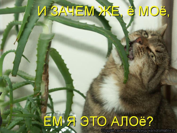 Котоматрица: И ЗАЧЕМ ЖЕ, ё МОё, ЕМ Я ЭТО АЛОё?