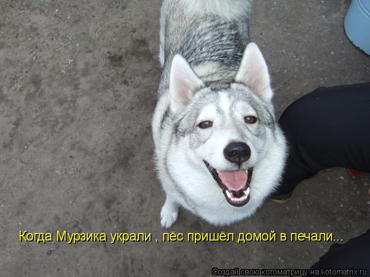 Котоматрица: Когда Мурзика украли , пёс пришёл домой в печали...