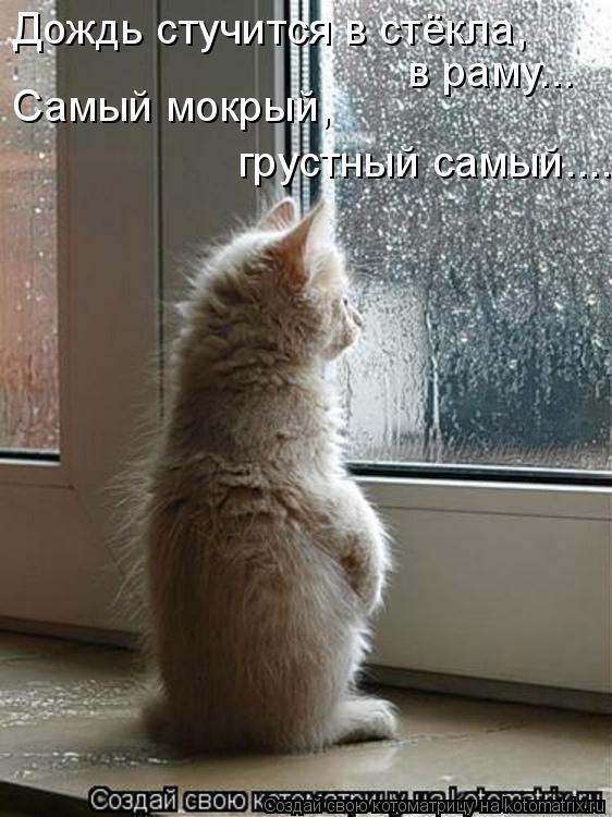 Котоматрица: Дождь стучится в стёкла,  Самый мокрый,  грустный самый.... в раму...
