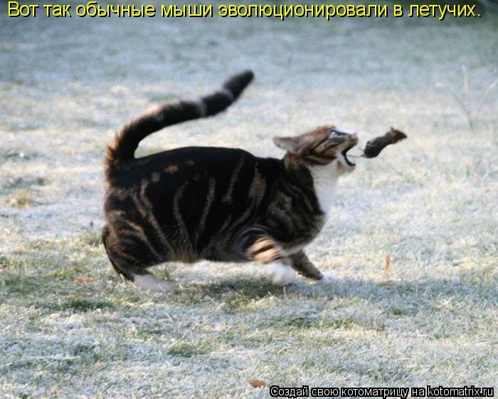 Котоматрица: Вот так обычные мыши эволюционировали в летучих.