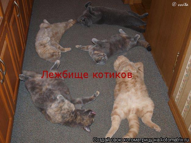 Котоматрица: Лежбище котиков