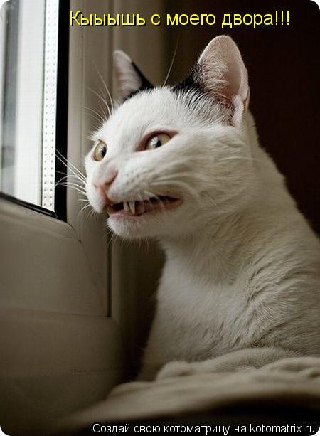 Котоматрица: Кыыышь с моего двора!!!