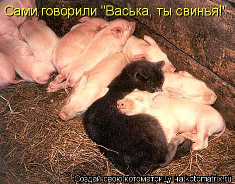 """Котоматрица - Сами говорили """"Васька, ты свинья!"""""""