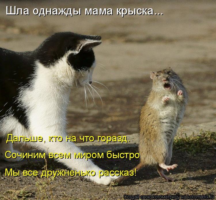 Котоматрица - Шла однажды мама крыска... Дальше, кто на что горазд. Сочиним всем мир