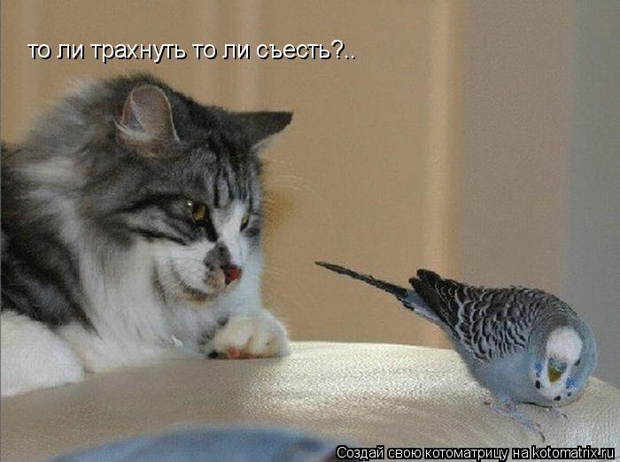 Котоматрица: то ли трахнуть то ли съесть?..