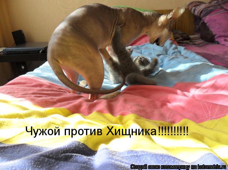 Котоматрица: Чужой против Хищника!!!!!!!!!!